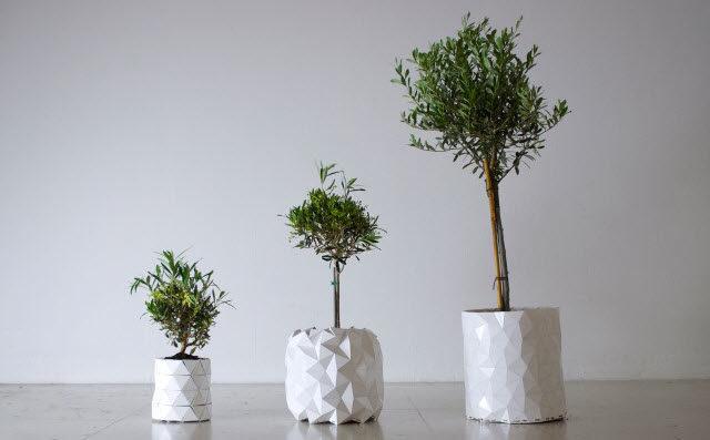 🌴 Un macetero muy especial que crece a la par de tu planta 🌴