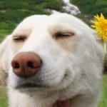 🐶 Creó una marca de comida vegana para mascotas