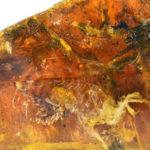🐥 Hallazgo revolucionario: científicos descubren un dinosaurio atrapado en ámbar
