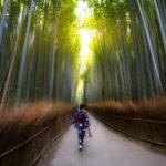 🌲 La saludable terapia japonesa de Shinrin-yoku 🌲