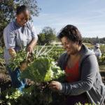 🌱 Mujeres y agricultura urbana sostenible