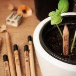 🌺 El lápiz que germina una planta