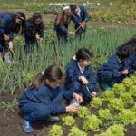 🍅 Escuelas con huertas orgánicas por ley