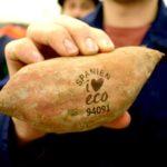 🍏 Alimentos tatuados reemplazan embalajes plásticos