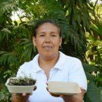 🍴 Vajilla biodegradable que germina al desecharla