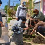 'Ciudad Frutal' donde la fruta crece en la vereda y es de todos