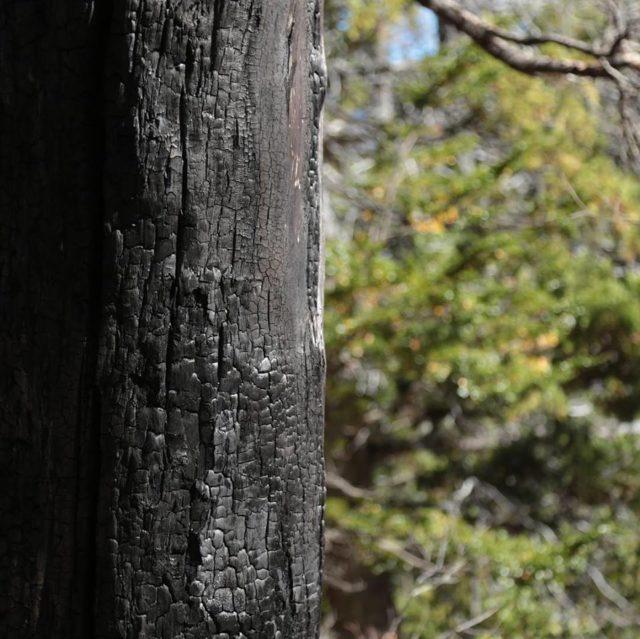Voluntários plantam 11.500 árvores para recuperar a floresta queimada na Argentina 5