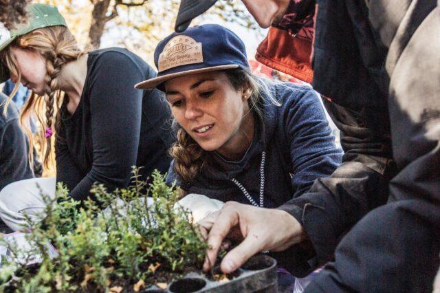 Voluntários plantam 11.500 árvores para recuperar a floresta queimada na Argentina 2