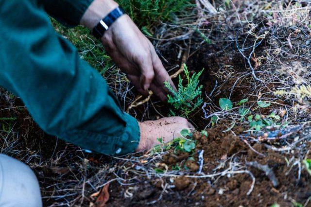 Voluntários plantam 11.500 árvores para recuperar a floresta queimada na Argentina 6