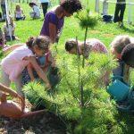 Un árbol plantado por cada nacimiento en la ciudad de Bruselas