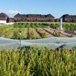 Este supermercado cultiva vegetales en su propio techo vivo