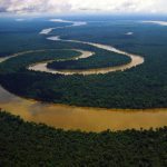 🌳 15 datos increíbles sobre la Selva Amazónica