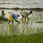 ✨ Empoderar a las mujeres para alimentar mejor al mundo y proteger el planeta