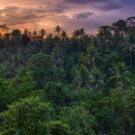 🌳 Un ejército de árboles para luchar contra el cambio climático