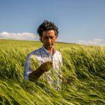 🌱Este hombre volvió al cultivo de granos ancestrales en Sicilia