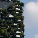 🌳 Las ONU proyecta plantar Bosques Urbanos en 30 países