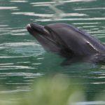 🐬 Delfines y Cisnes aparecen en los canales de Venecia