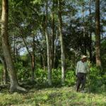 🌴 Este hombre plantó un Árbol Cada Día de su vida durante 37 años