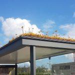 🐝 Paradas de autobús con Techos Verdes para preservar a las Abejas