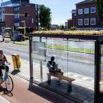 🌺🐝🐝 Holanda preserva a las Abejas con Techos Verdes en Paradas de Autobús