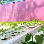 🌱 Un brasileño diseña la primera teja hidropónica del mundo