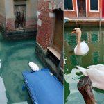 Coronavirus: el Agua de los canales de Venecia nunca ha sido tan clara
