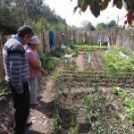 🌱 Las Huertas familiares se Revalorizan durante la Cuarentena
