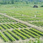 🌱 Contratan a 63,000 Desempleados para Plantar mil Millones de Arboles