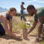 🌱 Estas Incubadoras de Cartón Reciclado podrían revertir el Cambio Climático