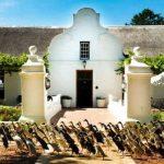 🦆 Un desfile de Patos mantiene este viñedo Libre de Plagas