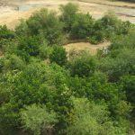 🌳 Mini Bosques de rápido crecimiento para Ayudar al Clima
