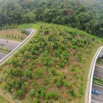 🐯 Por primera vez en India: 'Ecoductos' para preservar la Biodiversidad