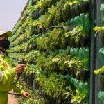 Crean Biohuerto con 3 mil macetas hechas con Botellas Plásticas