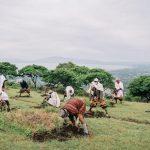 🌳 Etiopía está Plantando 4 mil millones de Árboles