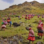 🌳 Comunidades Originarias Reforestan los Andes