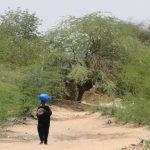🌳Científicos descubren Bosque en el Desierto del Sahara
