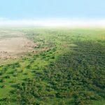🌳 La Gran Muralla Verde de África está dando Resultados
