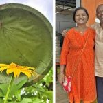 🌱 Reviven la tradición de Comer en Hojas para evitar Plásticos
