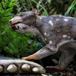 """🐺 Descubren Nueva Especie de Mamífero de la """"Era de los Dinosaurios"""" en Patagonia"""