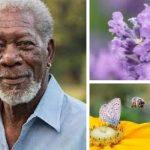 🐝 Morgan Freeman transformó su rancho en un Santuario para Salvar a las Abejas