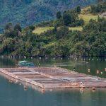 🌊 Tierra del Fuego Prohibió las Salmoneras en el Canal de Beagle
