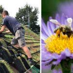 🌺🐝En Holanda crean Tejas Verdes que promueven la Biodiversidad y mejoran el Aislamiento