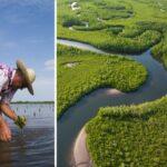 🌳 Este hombre Plantó 152 Millones de Manglares en 10 años