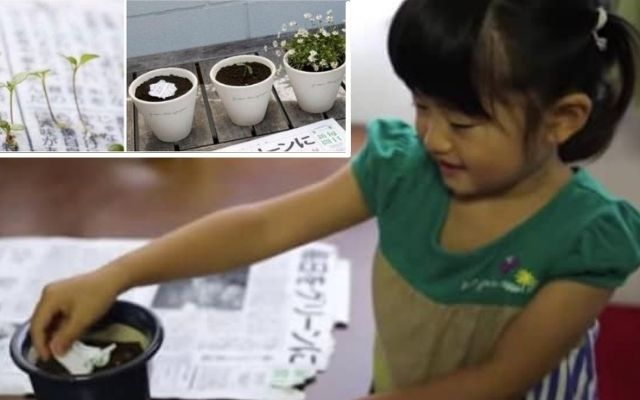 🌺🐝 Crearon un Periódico que al Desecharlo se Transforma en Flores